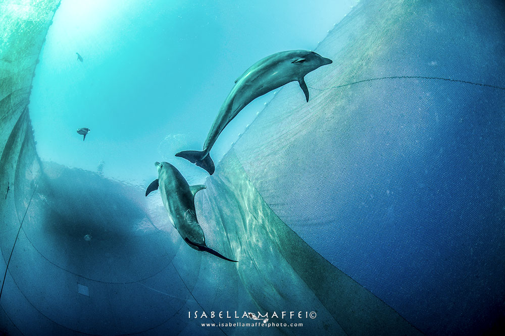 TRAPPED DOLPHINS