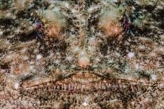 "<img src=""monkfish "" alt="" monkfish portrait isabella maffei underwater photographer "">"