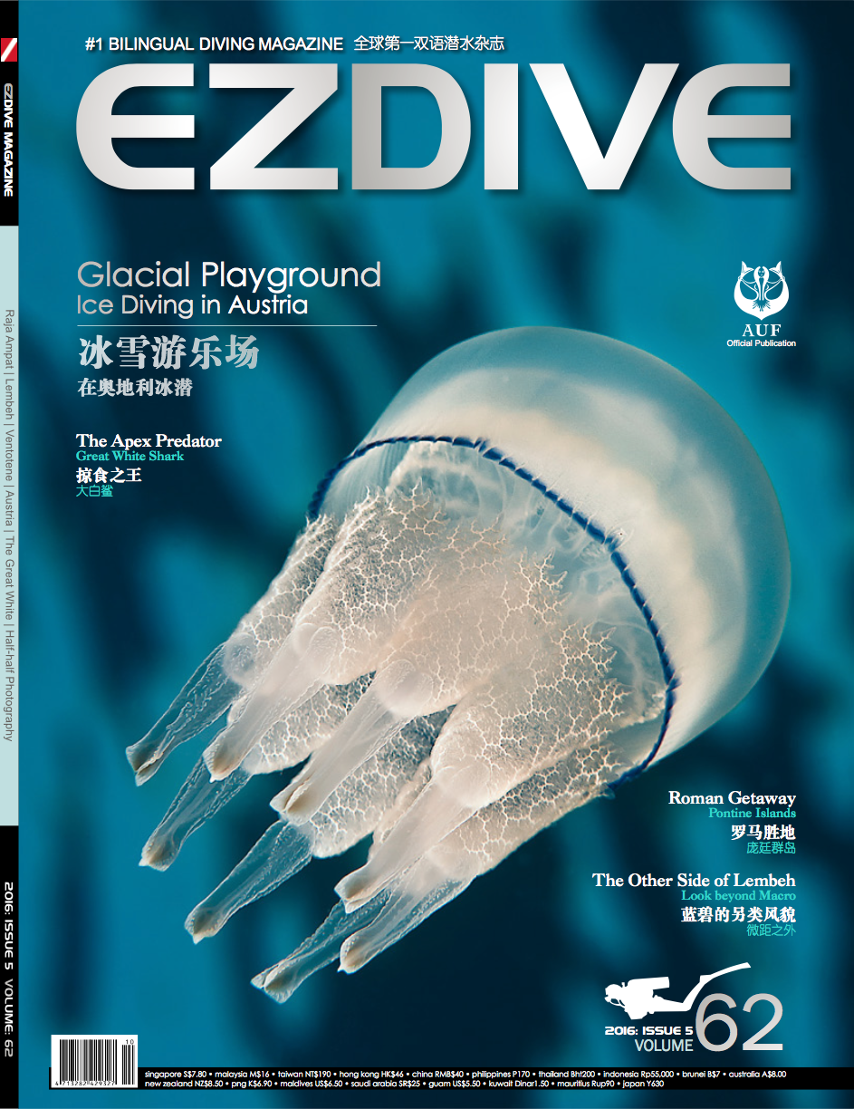 "FROZEN JELLYFISH"" Cover of EZDIVE 2016, issue 5 Volume 62"