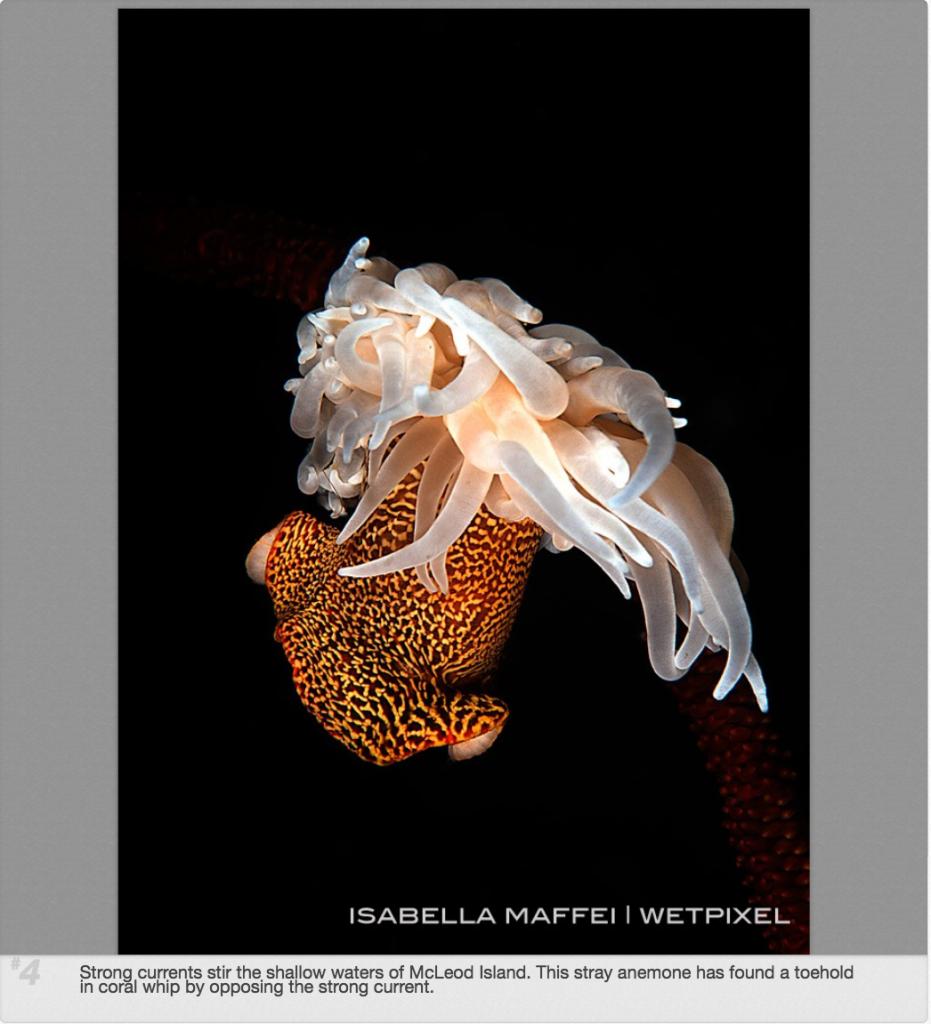 wetpixel-retrospective 2014 Isabella Maffei