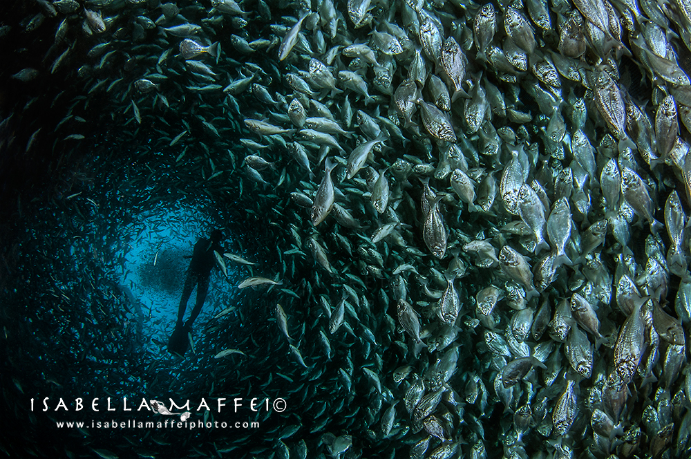 Aqua Fish Factory