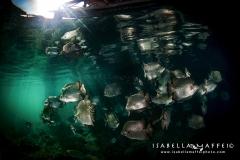 PHILIPPINES-SCHOOL-OF-FISH